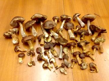 The mushroom kill